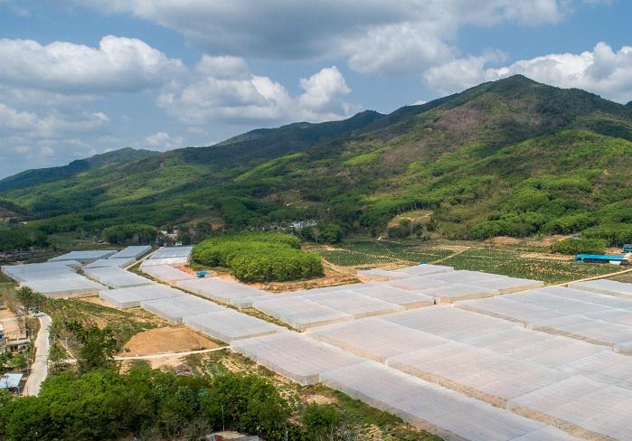 组图 | 500亩热带新型抗台风大跨度平顶网棚落户乐东